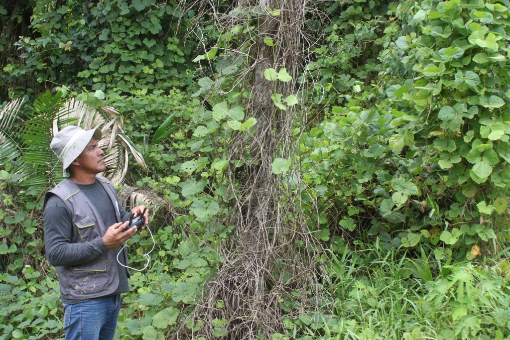 Wie Kann Man Den Regenwald Schützen